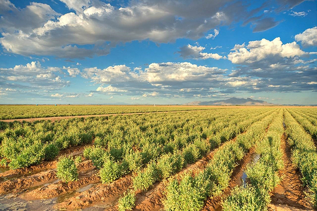 Guayule Farm Tire Business